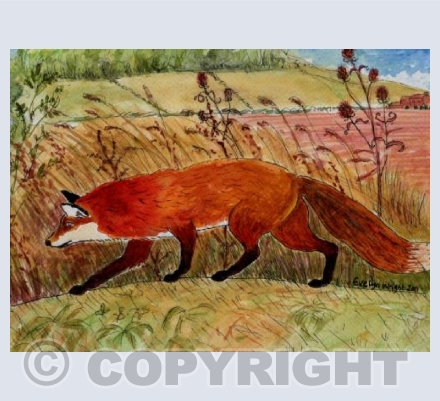 Fox in Lincolnshire landscape