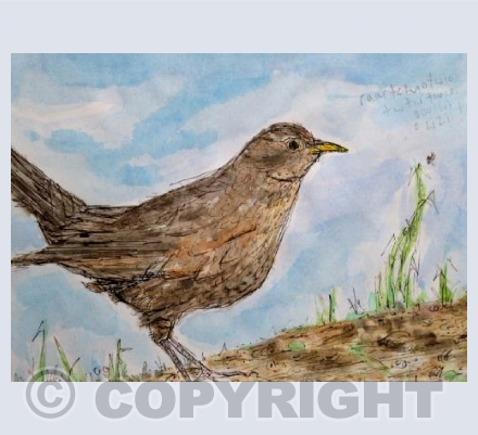 Female blackbird birdsong