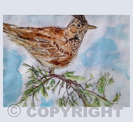 Skylark on branch