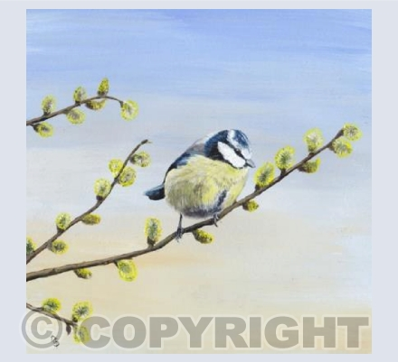 Blue Tit on Pussy Willow Card