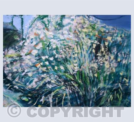 Spring cow parsley