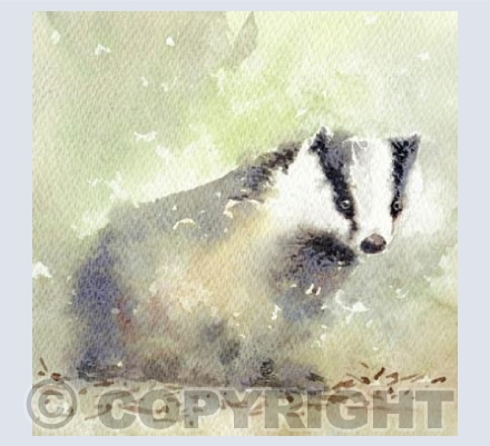 Cheeky Badger