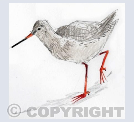 About Redshank Business