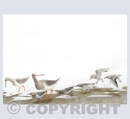 Redshank and Dunlin