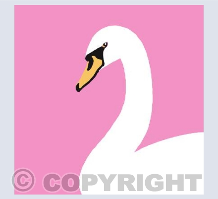 Swan on Pink
