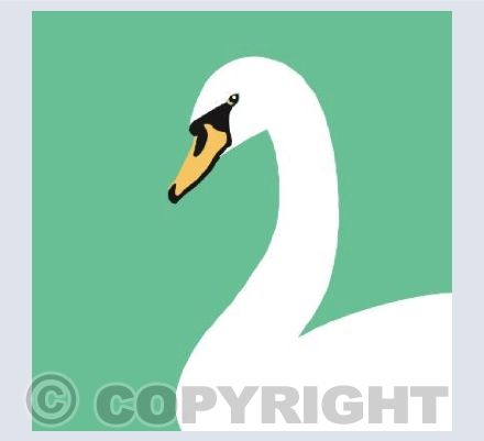 Swan on Green