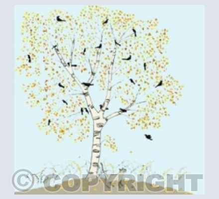 silver birches on blue