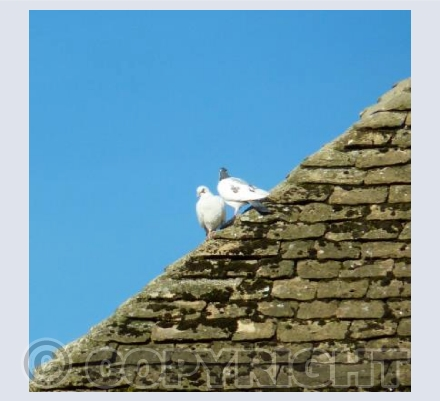 Rooftops of Calne - Wiltshire