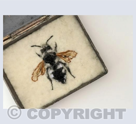Male Common Mourning Bee