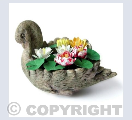 Waterlily Swan