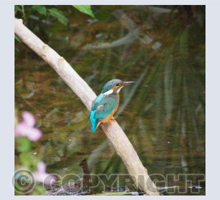 A Kingfishers Gaze