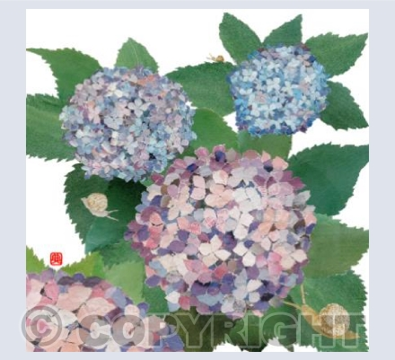 Hydrangeas and Snails