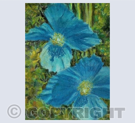 Meconopsis~the Blue Poppy