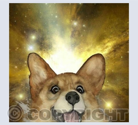 'CORGO IN SPACE'