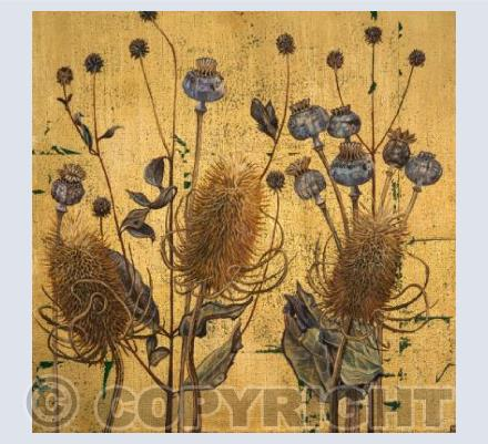 Teasels and Poppy Pods