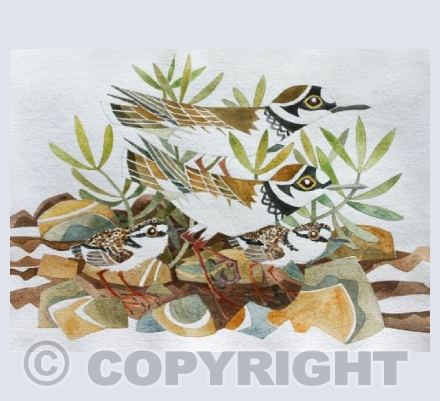 'Little Ringed Plovers'