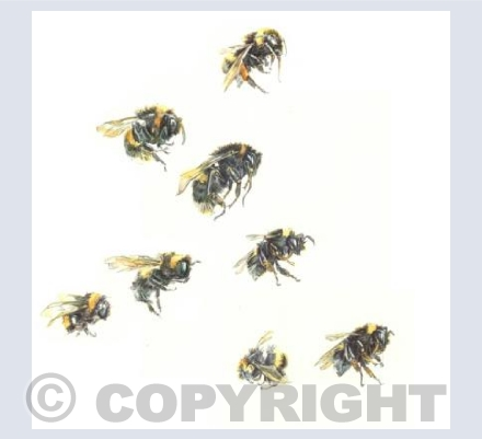 Bumble Bees (Telling Bees detail4)