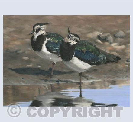 Autumn Lapwings