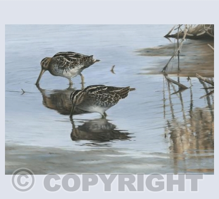 Snipe Reflections