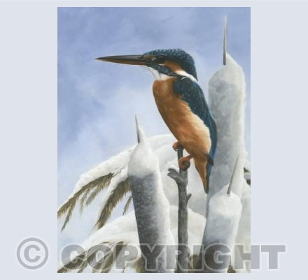Winter Kingfisher