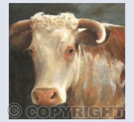 Hereford cow