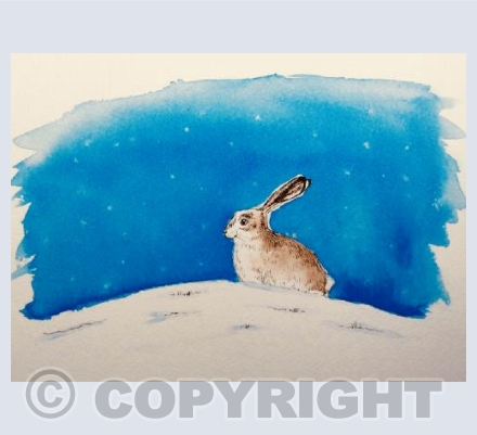 Night time hare