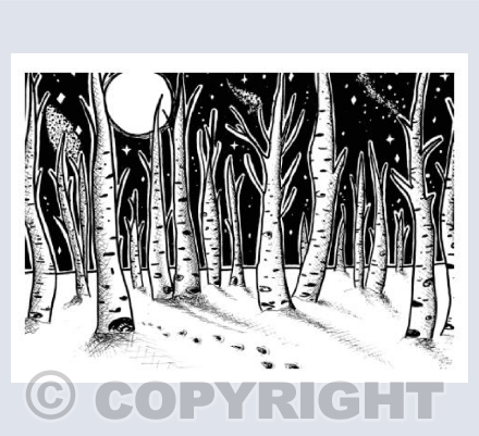 Silver Birches by Moonlight