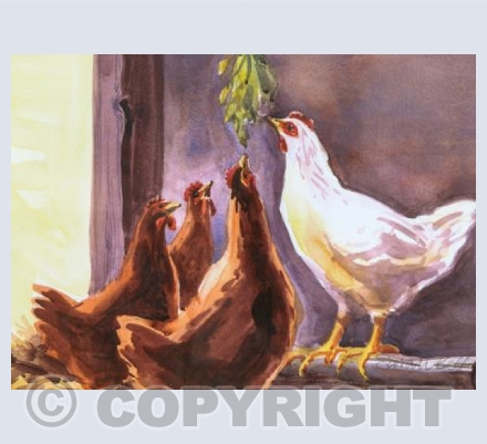 chickens feasting