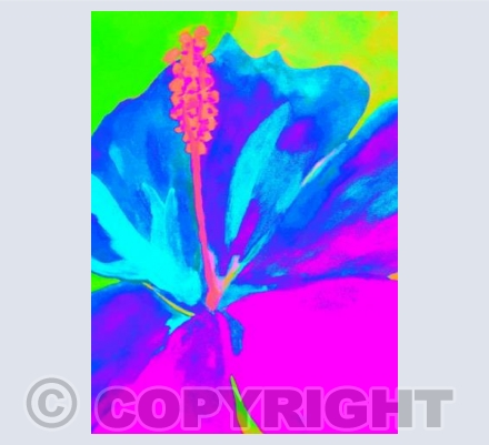 Neon Pink Blue Lily