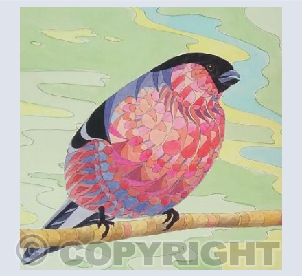 Patterned Bullfinch