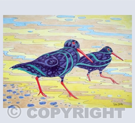 Patterned Oyster Catchers