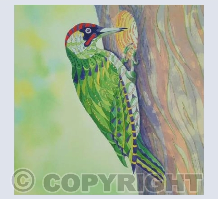 Patterned Woodpecker