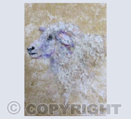 Cotswold Sheep #16
