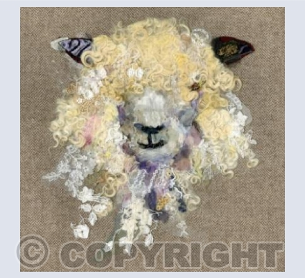 Cotswold Sheep #4