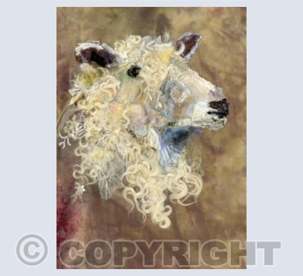 Cotswold Sheep #11