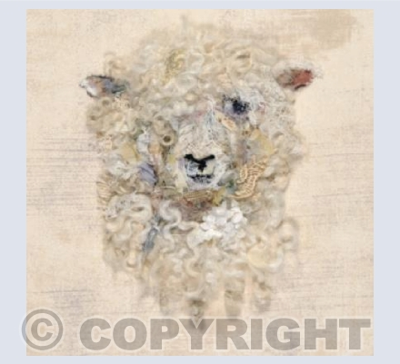 Cotswold Sheep #19