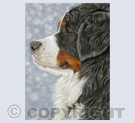 Bernese Mountain Dog - Let it Snow
