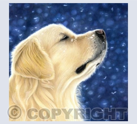 Golden Retriever - Meditation