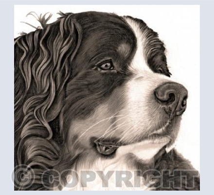Bernese Mountain Dog - Sepia Style