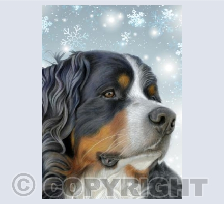 Bernese Mountain Dog - Snowflakes