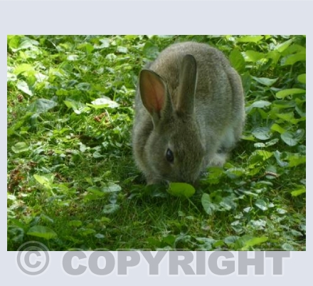Rabbit in the park