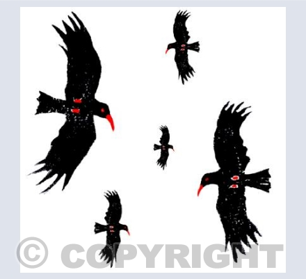 five flying choughs