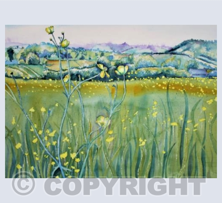 Somerset Buttercups