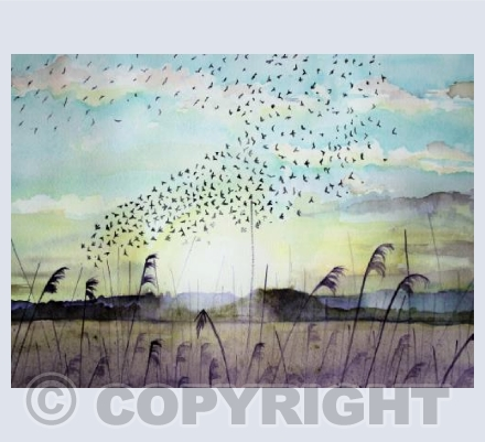 Starlings on the Avalon Marshes