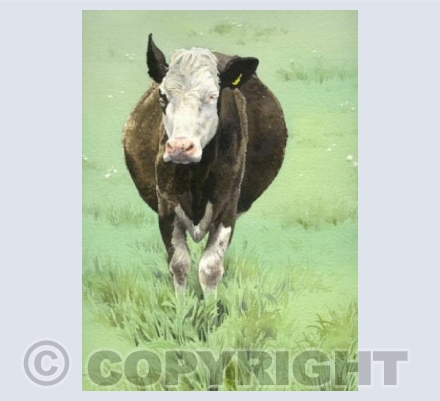 Thickwood Cow