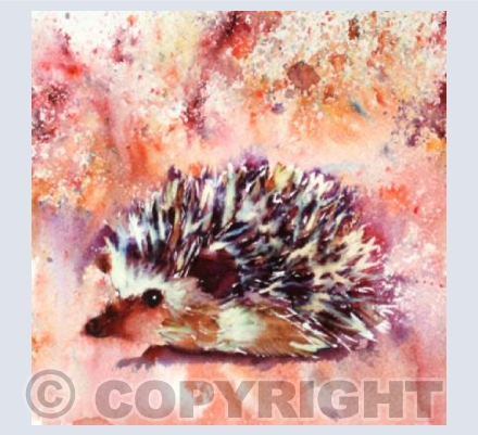 Brusho Hedgehog