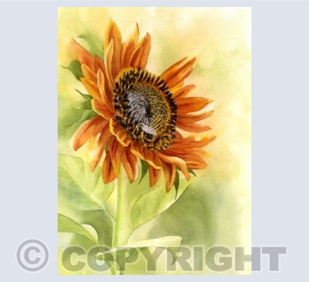 Sunflower gold