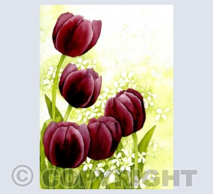 Ruby Tulips