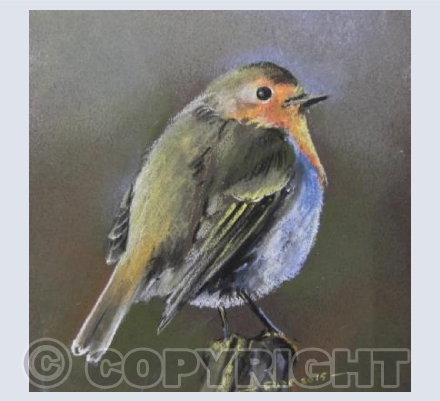 Robin red-breast