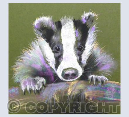 Boris the Badger